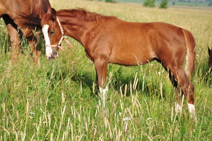 Выпас коней 2